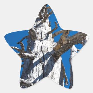 Tres árboles esqueléticos con el cielo azul pegatina en forma de estrella