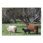 Tres árboles viejos de las ovejas felicitación
