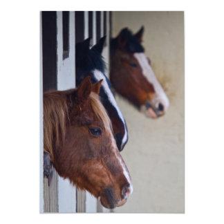 Tres caballos en la invitación de los establos
