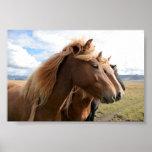 Tres caballos en un poster de la fila