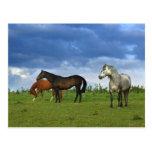 Tres caballos hermosos en día de verano soleado postales