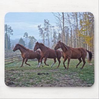 Tres caballos que se mueven como un regalo de la tapetes de ratón