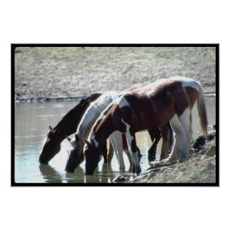 Tres caballos salvajes beben en un poster del aguj