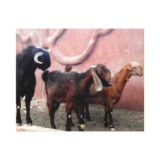 Tres cabras impresión en lienzo estirada