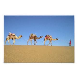 Tres camellos en el poster del desierto fotografía