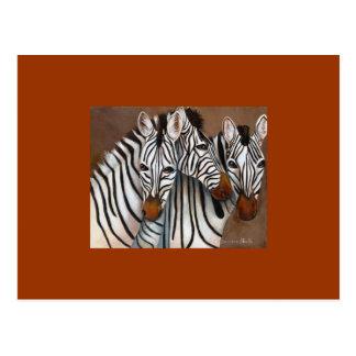 Tres cebras tarjeta postal