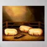 Tres cerdos premiados fuera de una pocilga poster