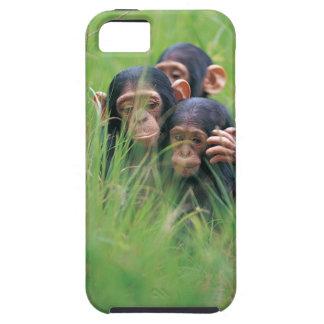 Tres chimpancés jovenes (trogloditas de la cacerol iPhone 5 cárcasa