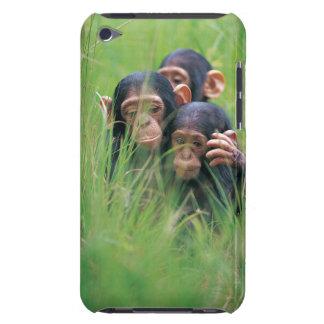Tres chimpancés jovenes (trogloditas de la cacerol iPod touch Case-Mate carcasas