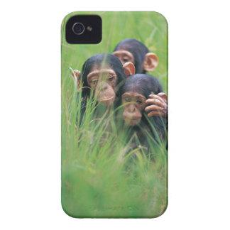 Tres chimpancés jovenes (trogloditas de la cacerol iPhone 4 Case-Mate carcasa