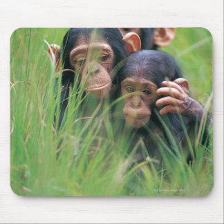 Tres chimpancés jovenes (trogloditas de la cacerol alfombrilla de raton