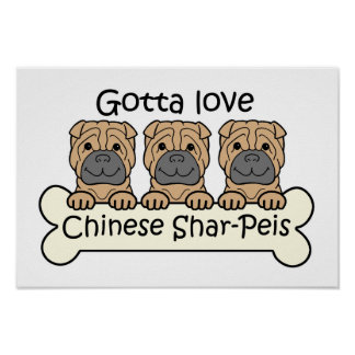 Tres chinos Shar-Peis Póster