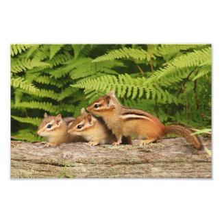 Tres Chipmunks adorables del bebé Fotografía