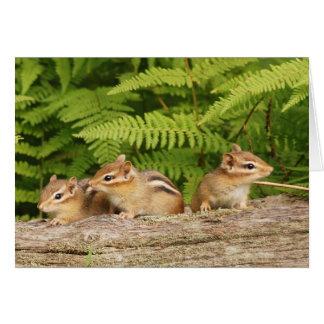 tres chipmunks del bebé tarjeta