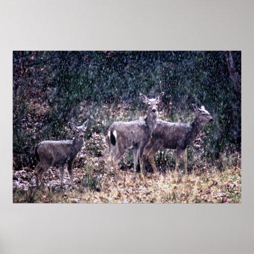 Tres ciervos en la nieve - Sierra Nevadas Poster
