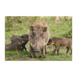 Tres cochinillos de Warthog amamantan en su madre Impresiones En Lona Estiradas