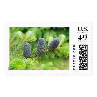 Tres conos del pino timbres postales