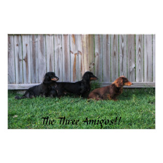 Tres Dachshunds Poster
