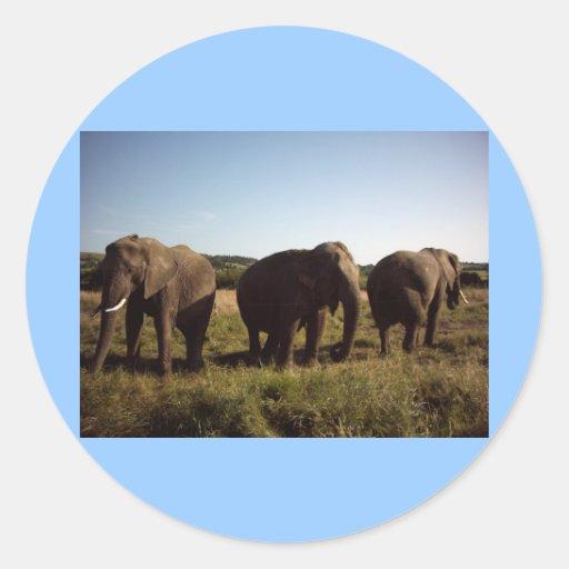 Tres elefantes pegatina redonda