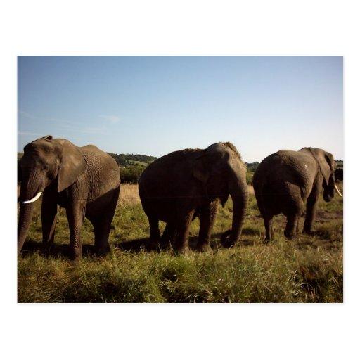 Tres elefantes postal