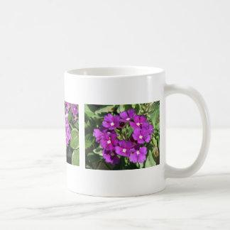 Tres floraciones de la verbena taza clásica