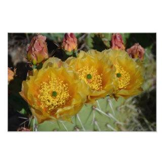 Tres flores amarillas del cactus fotografías