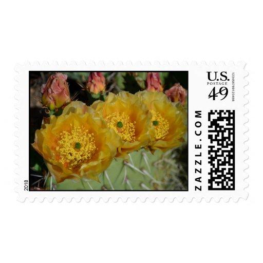 Tres flores amarillas del cactus franqueo