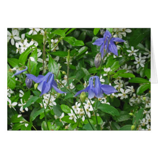 Tres flores de Columbine azul Tarjeton