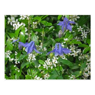 Tres flores de Columbine azul Postales