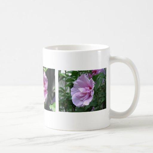 Tres flores de Hibiscuc de la gasa de la lavanda Taza De Café