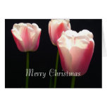 Tres flores rosadas del tulipán.  Navidad, días de Tarjeta De Felicitación