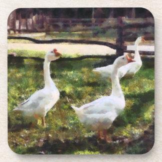 Tres gansos blancos posavasos