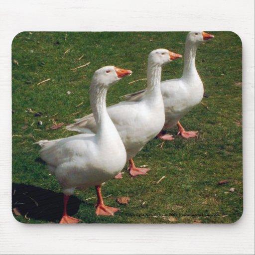 Tres gansos el apuntalar - Mousemat. Modifique par Alfombrillas De Ratón