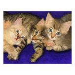 Tres gatitos anuncio