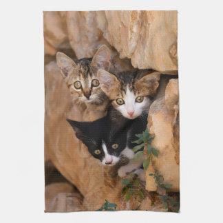 Tres gatitos curiosos lindos toallas de cocina
