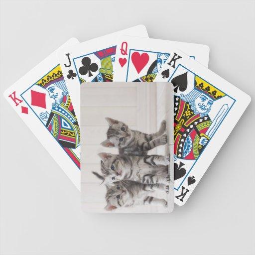 Tres gatitos de Shorthair del americano Baraja