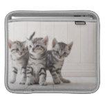 Tres gatitos de Shorthair del americano Manga De iPad