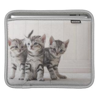 Tres gatitos de Shorthair del americano Mangas De iPad