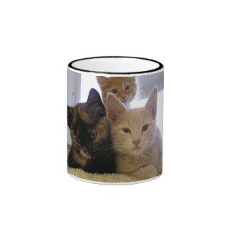 Tres gatitos del refugio taza de dos colores