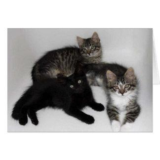 Tres gatitos esconden la tarjeta de felicitación