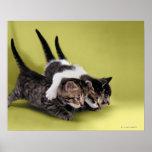 Tres gatitos que se abrazan impresiones