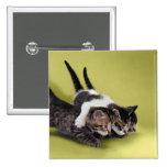 Tres gatitos que se abrazan pins