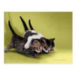 Tres gatitos que se abrazan postal
