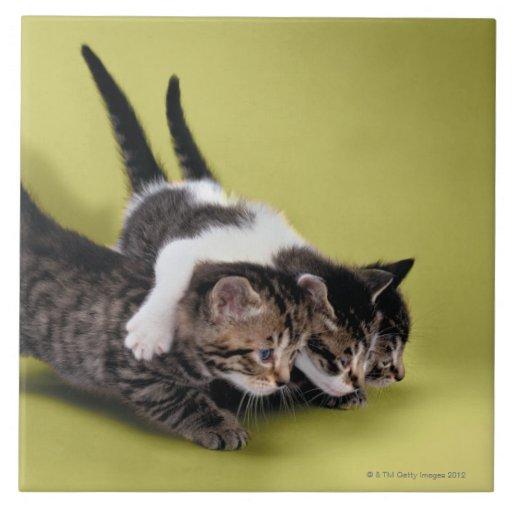 Tres gatitos que se abrazan teja cerámica