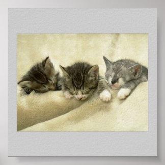 Tres gatitos soñolientos póster