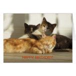 Tres gatos de relajación, cumpleaños tarjeta