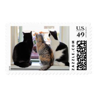 Tres gatos que miran hacia fuera el sello de la