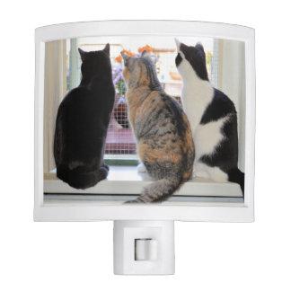 Tres gatos que miran hacia fuera la luz de la luces de noche