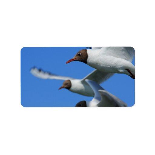 tres gaviotas que vuelan etiquetas de dirección