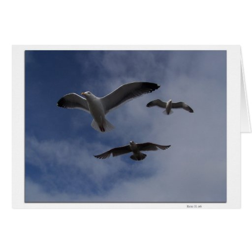 Tres gaviotas tarjeta de felicitación